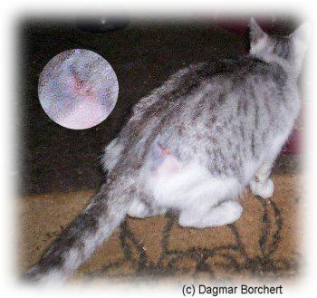 wunden desinfizieren bei katzen