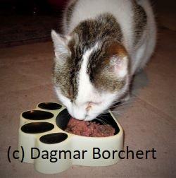 GranataPet Nassfutter für Katzen