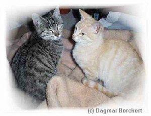 Katzen und Würmer