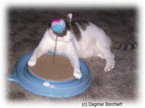 Play'n'Scratch - Katzenspielzeug